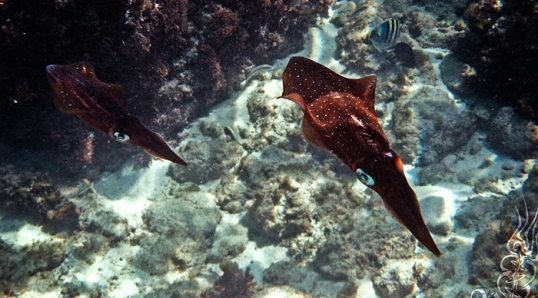 Scuba Diving in Aruba – April 2007 © Bryan Crabtree