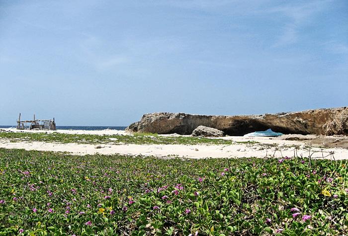 Aruba – April 2007 © Bryan Crabtree