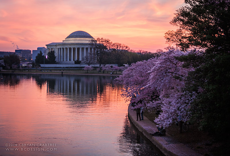 Cherry Blossoms at Dawn © Bryan Crabtree